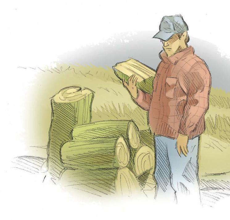 Carving Green Wood